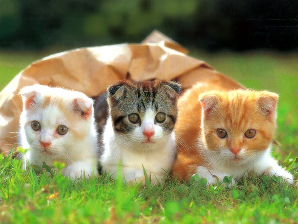 kucing-by-photobucket-com