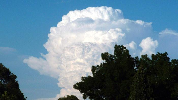 Awan kembang kol atau awan Colomunimbus